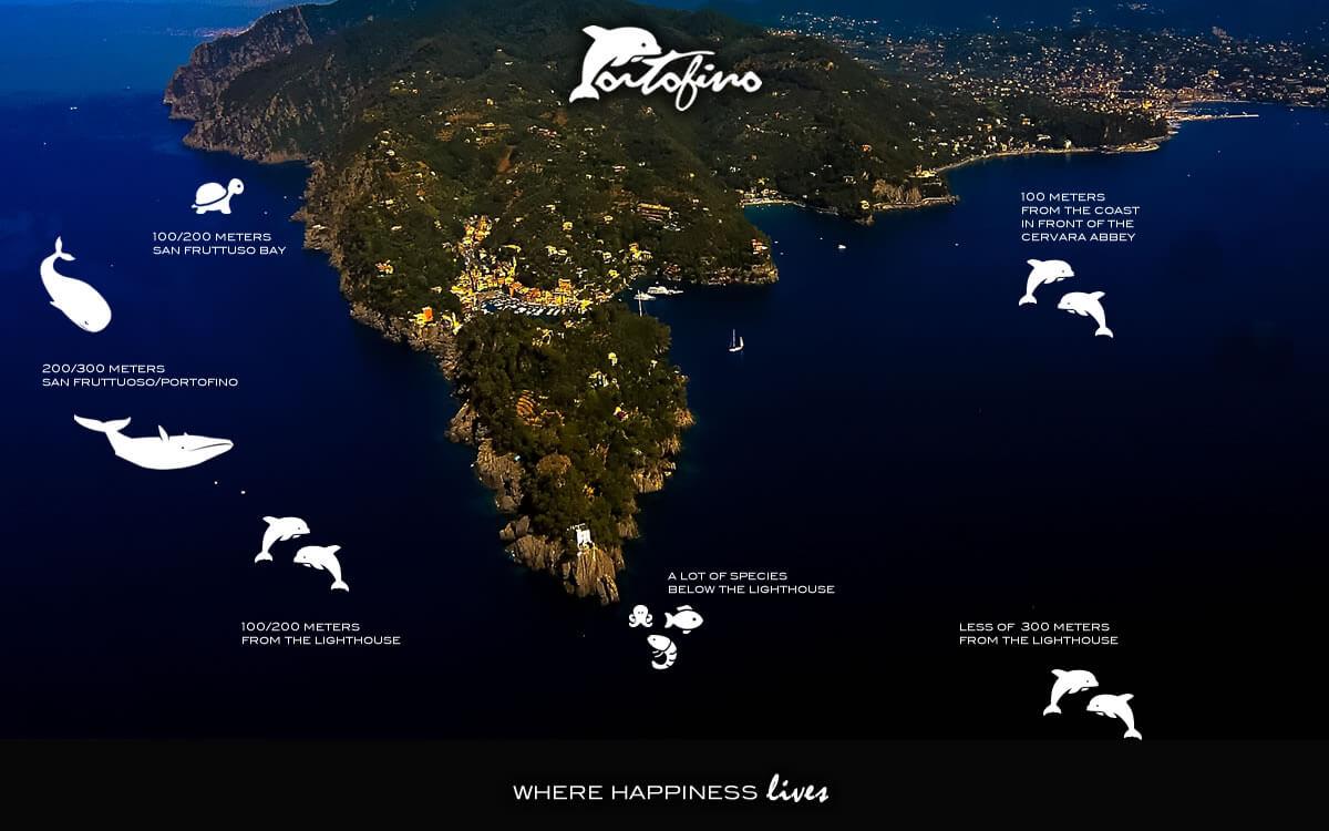 portofino-where-dolphins-october-2017