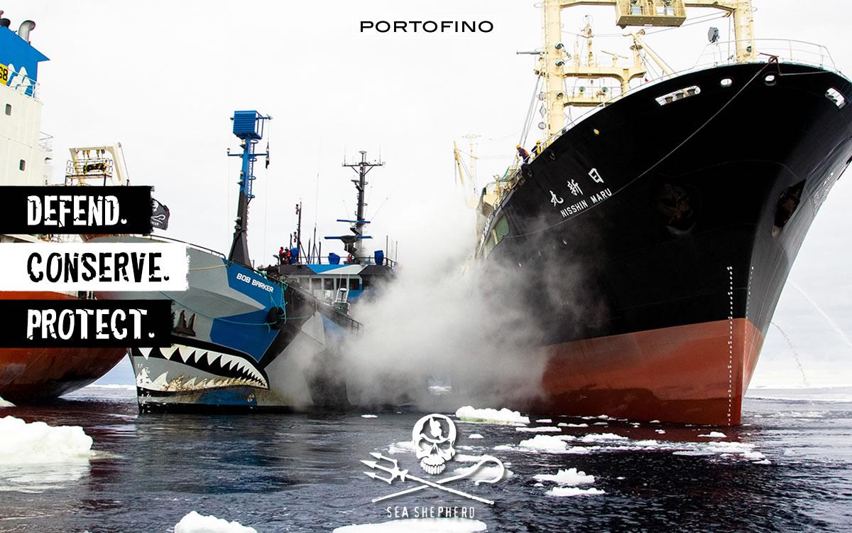 portofino-sea-shepherd-collision